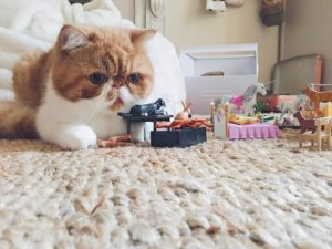 robertlechat qui joue aux playmobil autant que LilyRose Mamaaan Roberthellip