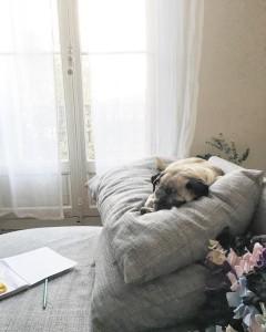 Une vie de chien  pug carlin