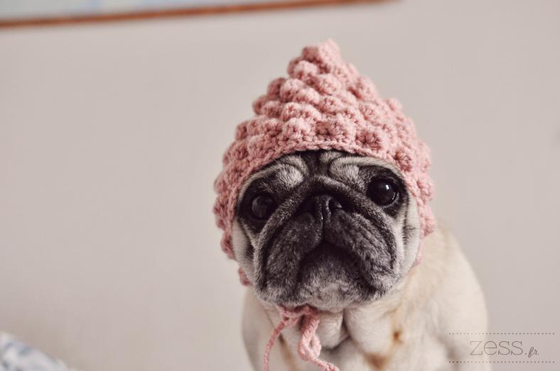 carlin pug hat instadog