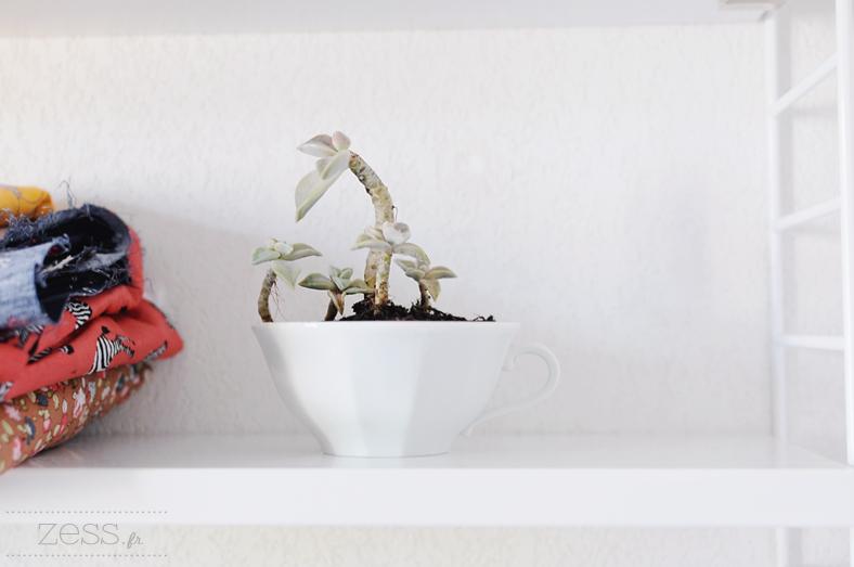 plantes grasses tasse succulentes