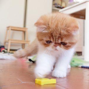 En toute objectivit cest le plus beau chaton de lahellip