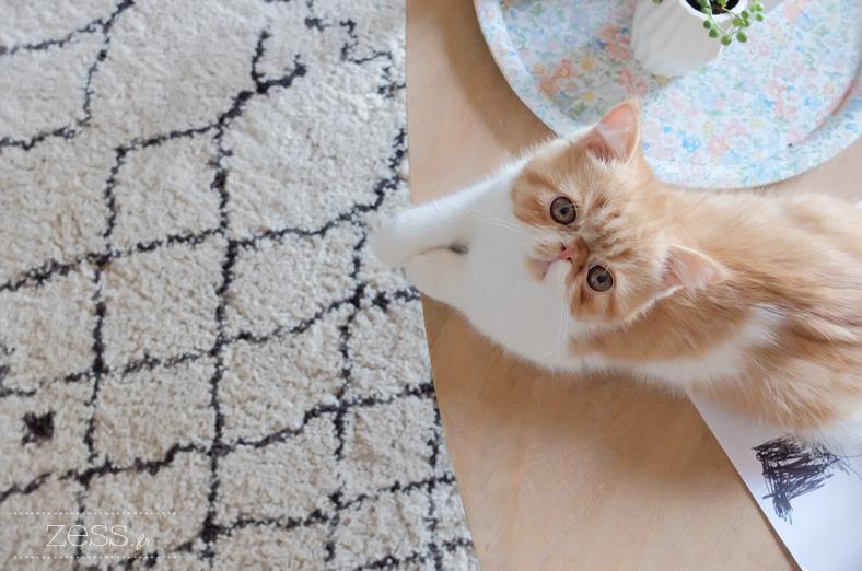 tapis berbère chaton exotic shorthair