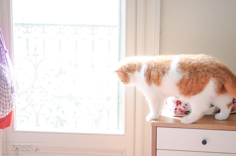 déco chat meuble