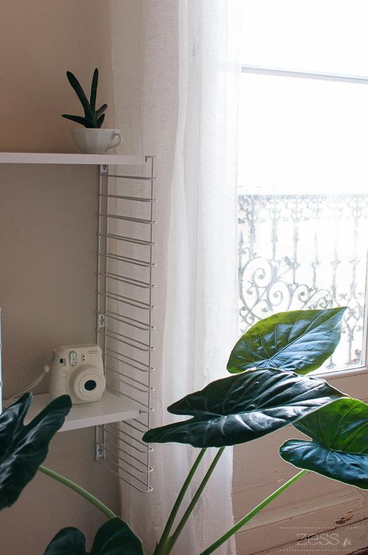 shelves plant