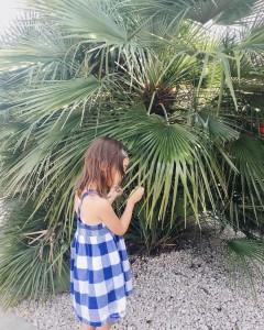 Tu vois le palmier l ? Cest un comme cahellip