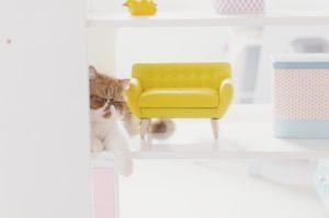 Ce chat est attir par lobjectif Il ntait pas lhellip