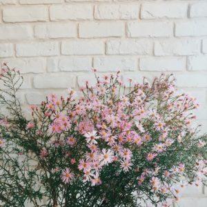 dernire semaine avant les vacaaances floues flowerstagram briques
