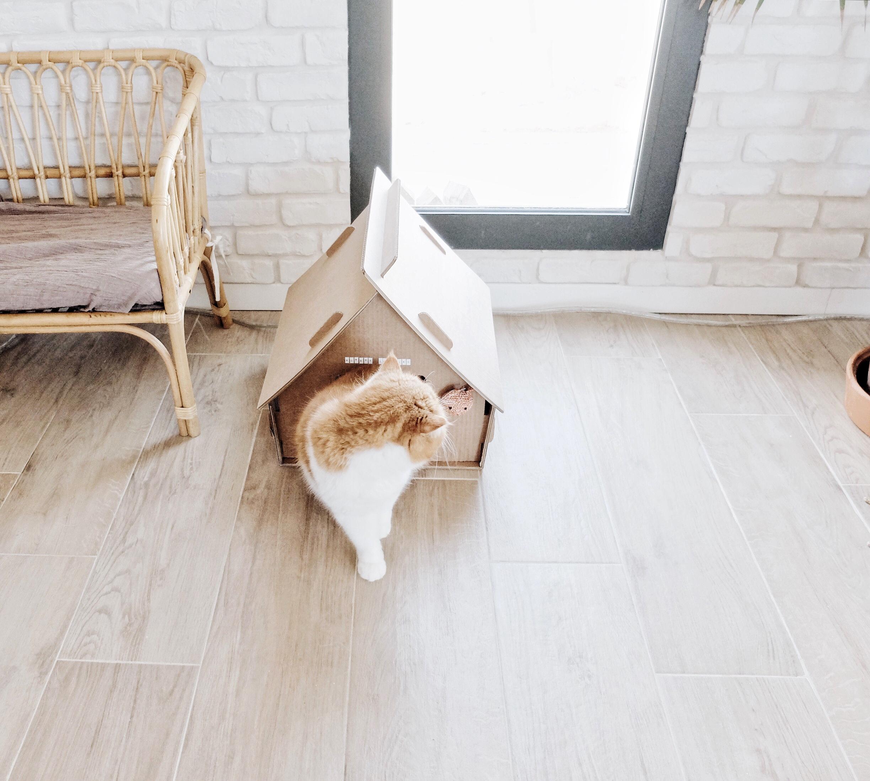 maison chat carton selfpackaging