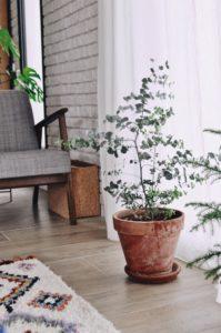 eucalyptus intérieur