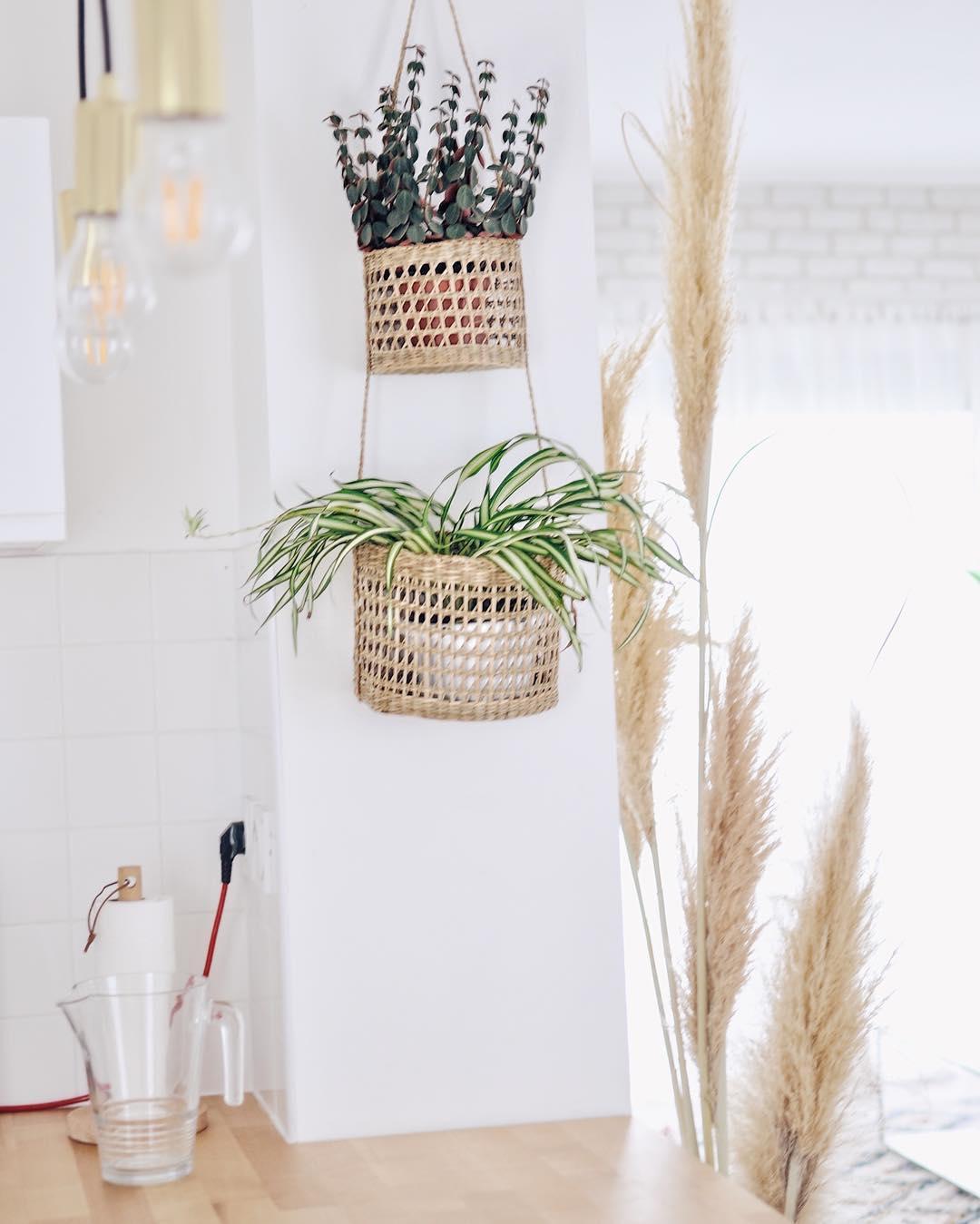 paniers suspensus plantes