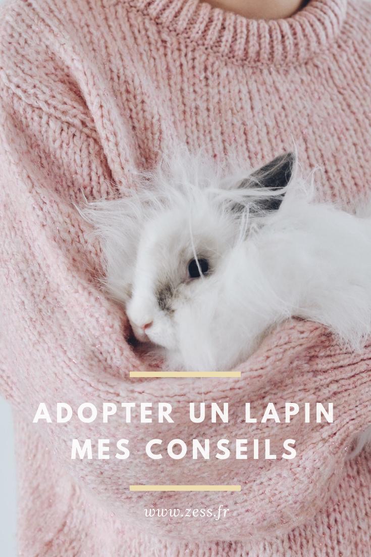 adopter et vivre avec un lapin conseils
