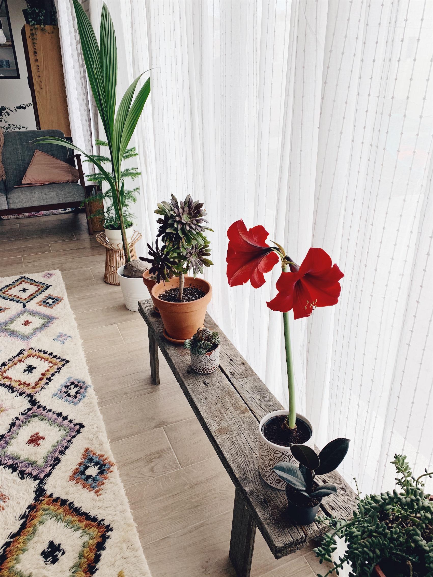 console plante palette