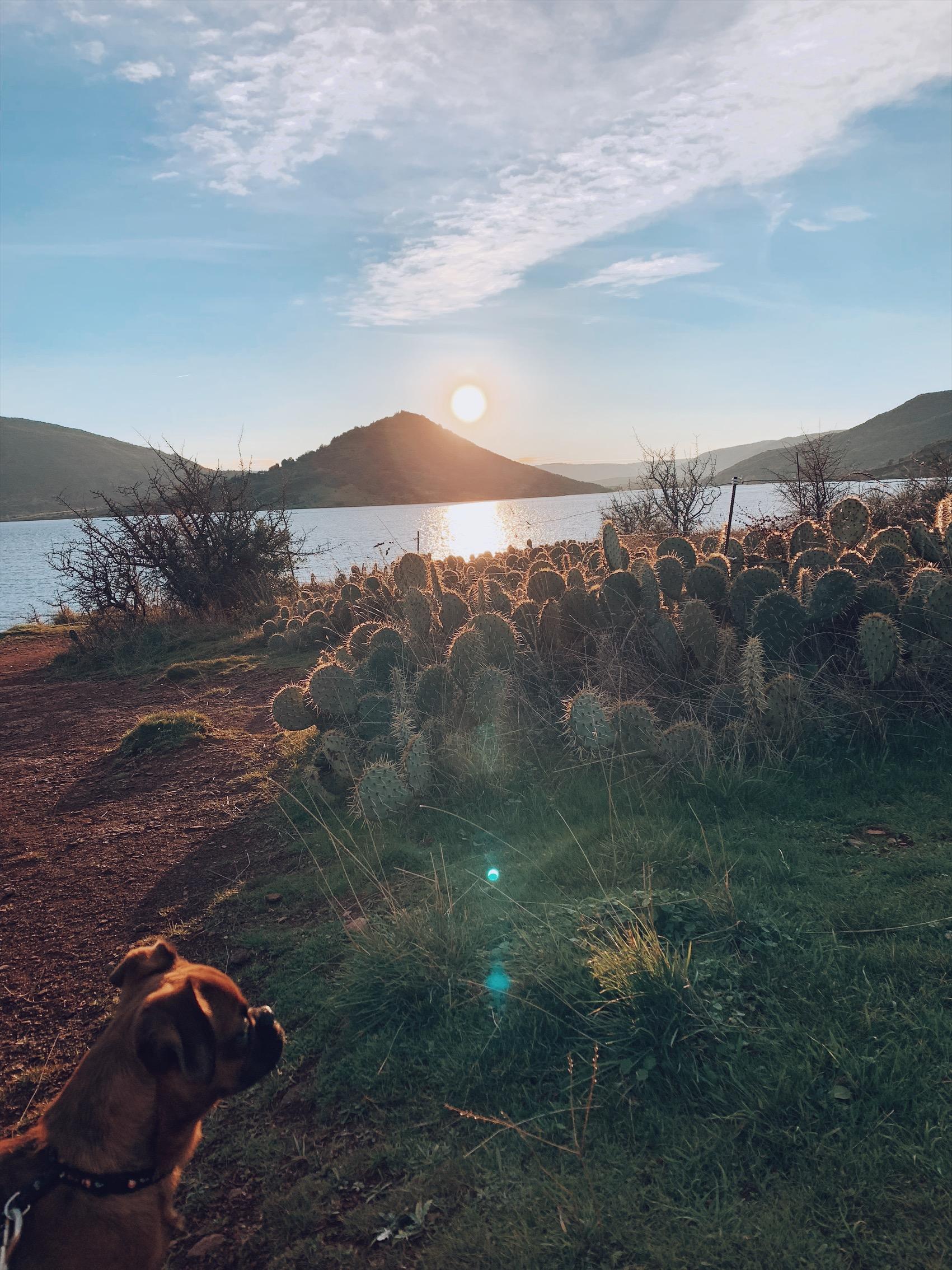 cactus salagou herault