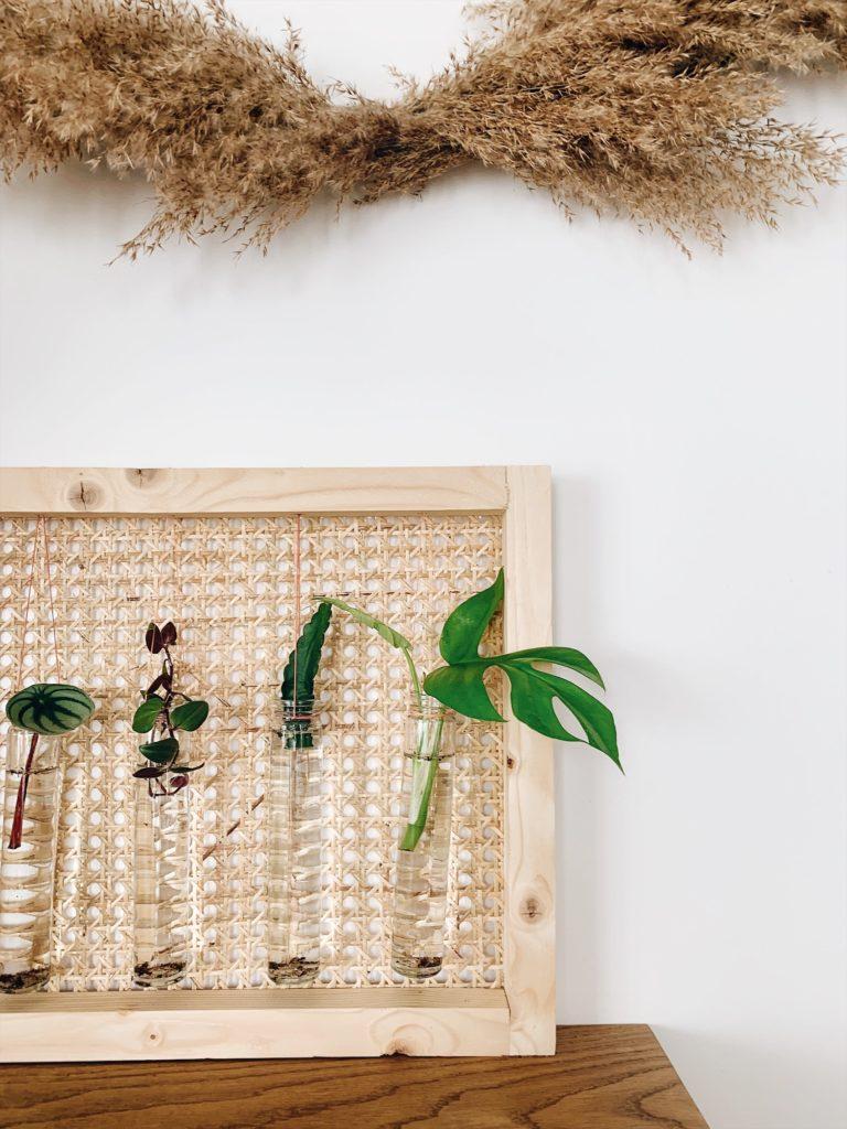 boutres plante d'intérieur