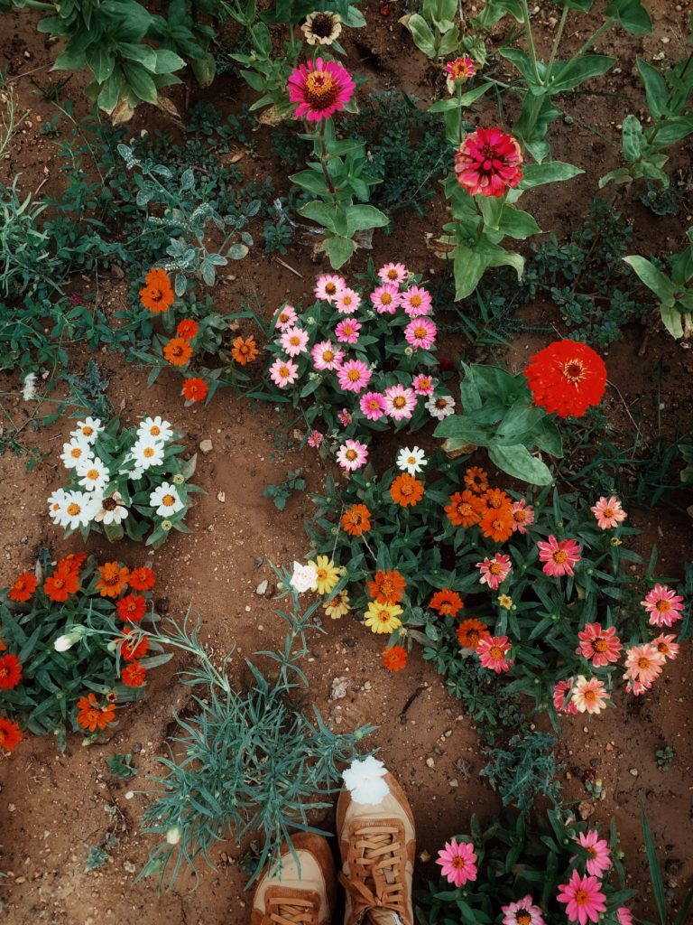 jardin semis fleurs