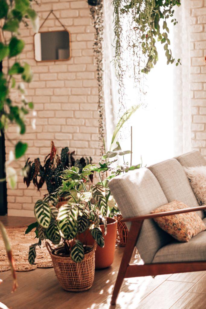 blog deco salon bohème plantes