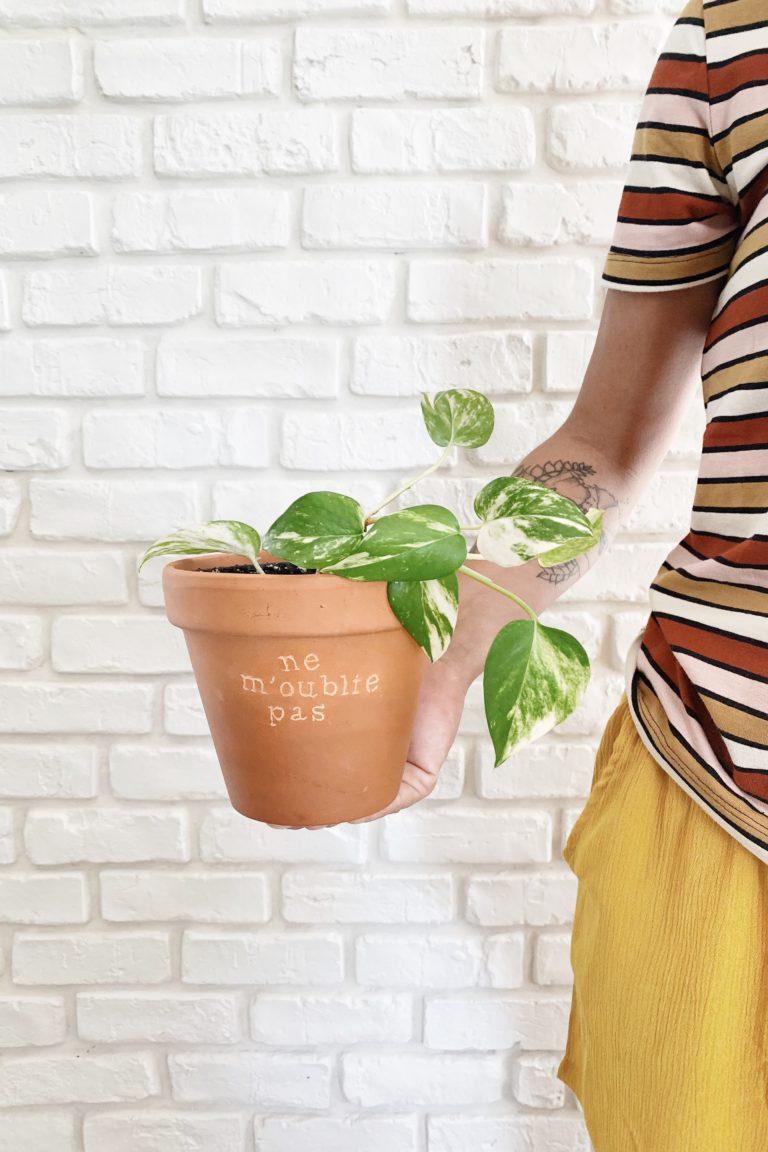 tuto pot de fleurs plantes