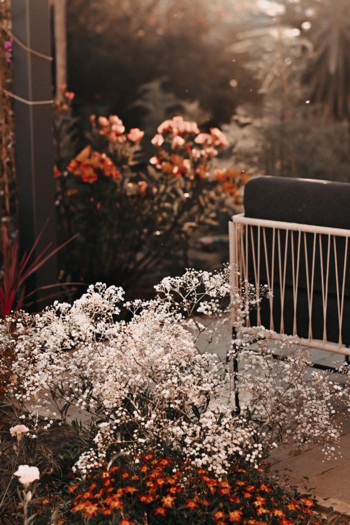 jardinage blog gypsophile