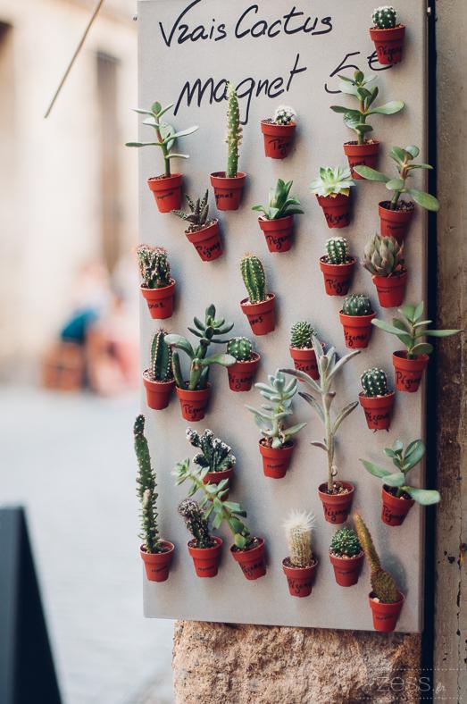 cactus lover mini