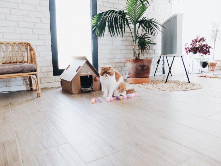maison chat carton