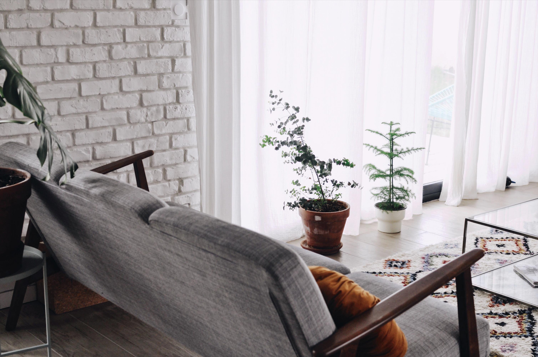 Plante D Intérieur A Faire Pousser conseils pour faire pousser un eucalyptus en intérieur