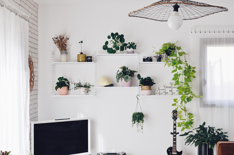 shelfie plantes étagère