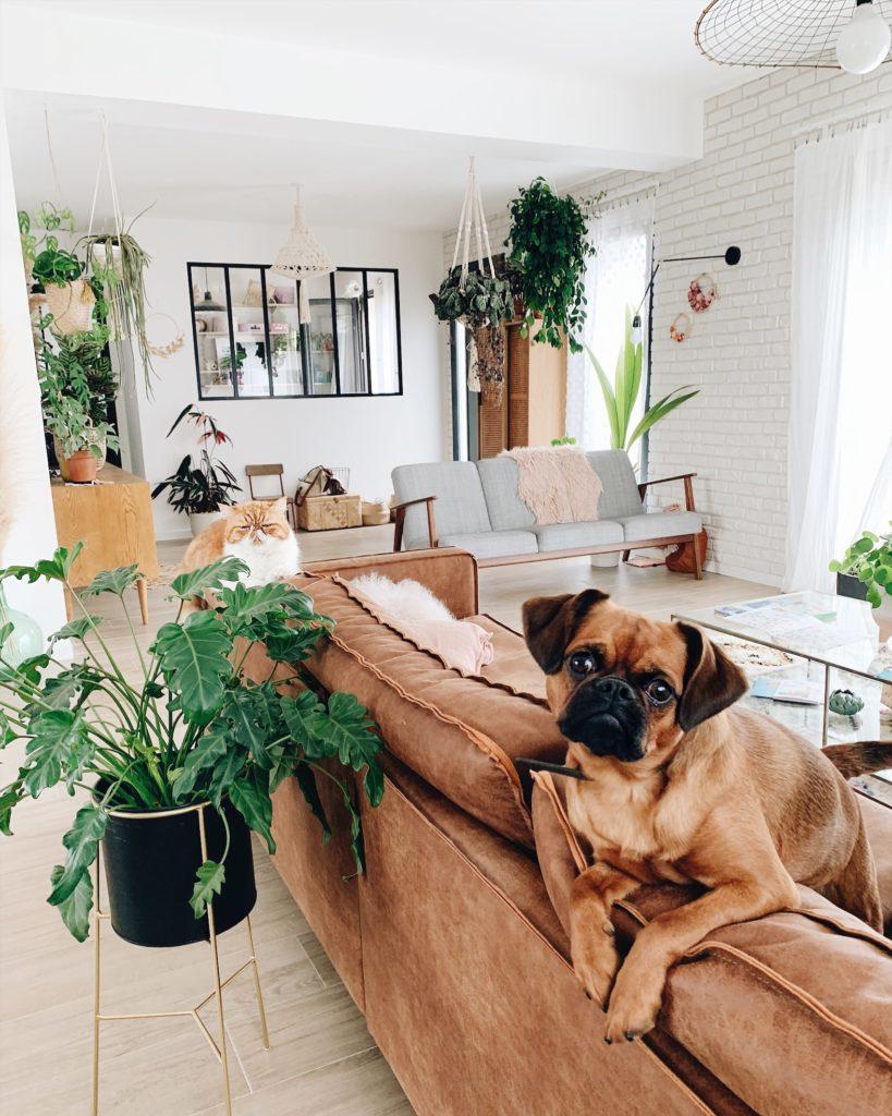 blog lifestyle animaux