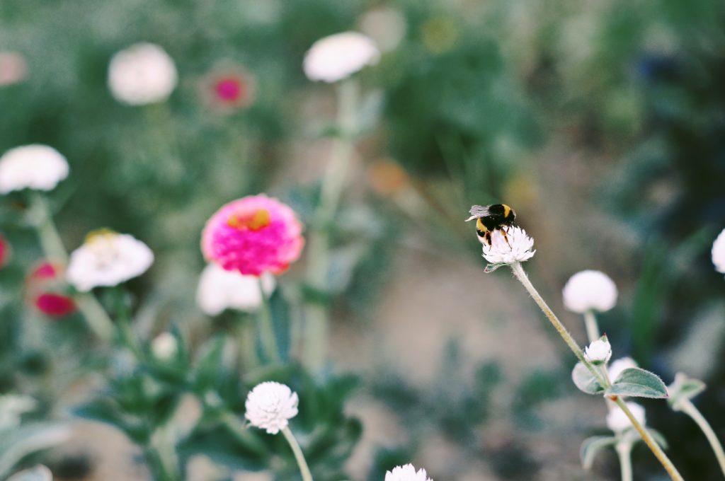 abeille jardin