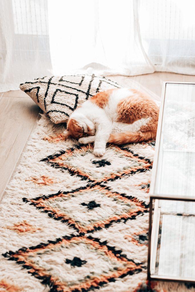 blog déco chat