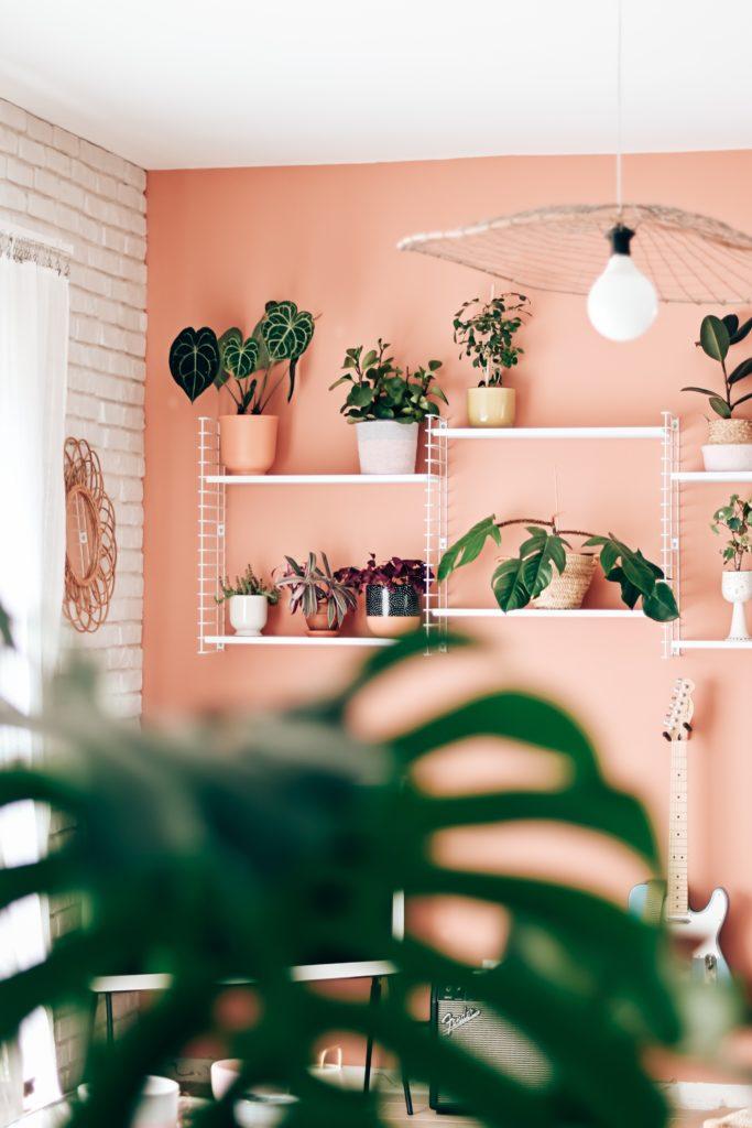 un mur rose deco plante