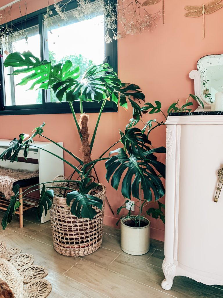 philodendron monstera tuteur coco