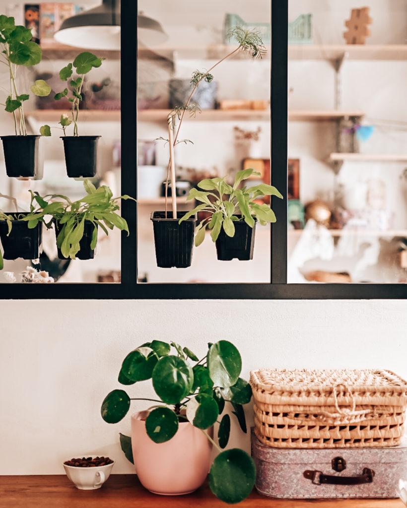 galerie végétale intérieure